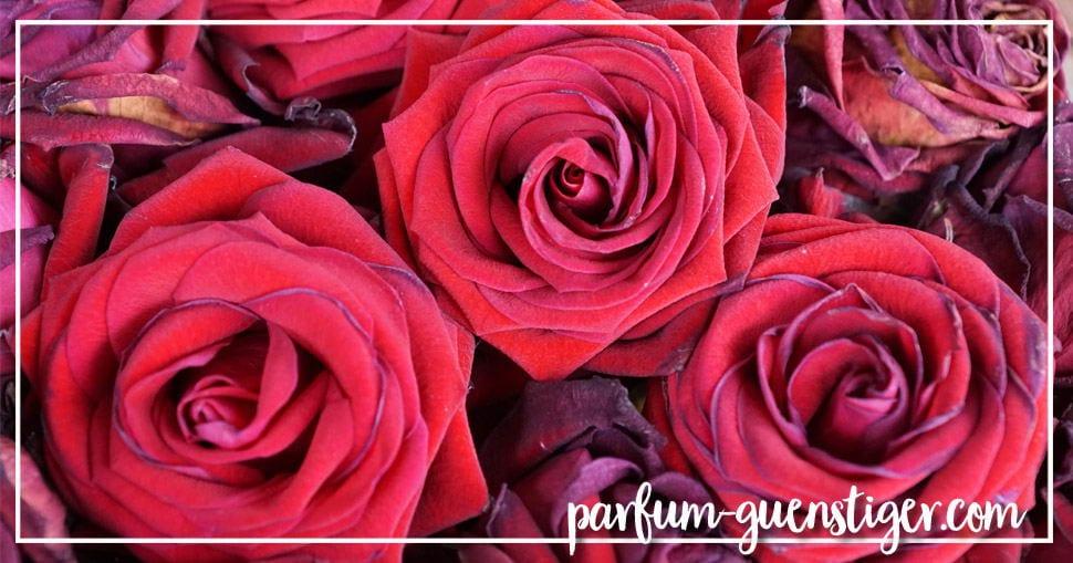 Parfum online bestellen